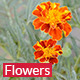 Orange Flowers - VideoHive Item for Sale