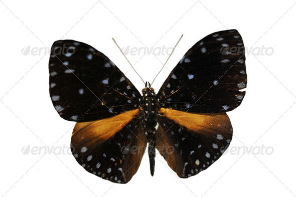 colorful butterfly - Stock Photo - Images