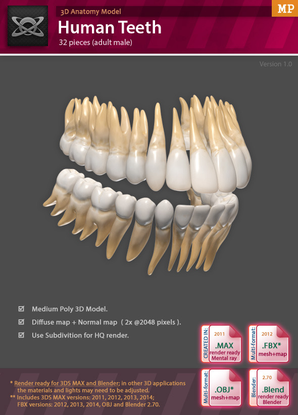 3D Anatomy - Human Teeth by Motion-Planet | 3DOcean