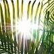Sunbeams Through Palm Leaves - VideoHive Item for Sale