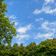 Sky with Clouds Framed by Trees - VideoHive Item for Sale
