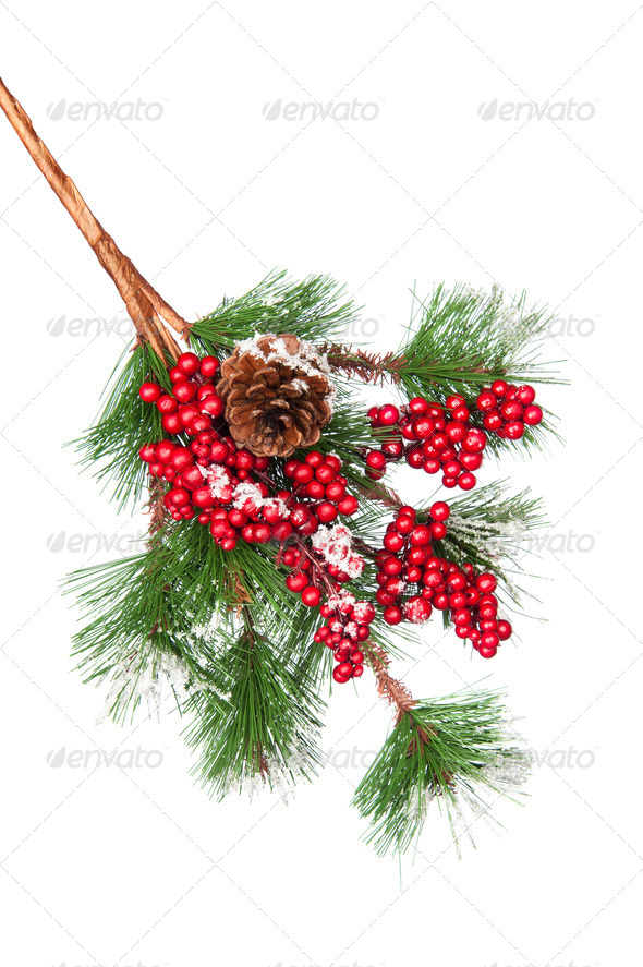 Decorated Christmas tree branch - Stock Photo - Images