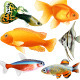 Aquarium Fish - GraphicRiver Item for Sale
