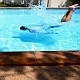 Man Diving in Swimming Pool in Slow Motion - VideoHive Item for Sale