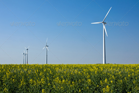 Windwheels in a field of rapeseed - Stock Photo - Images