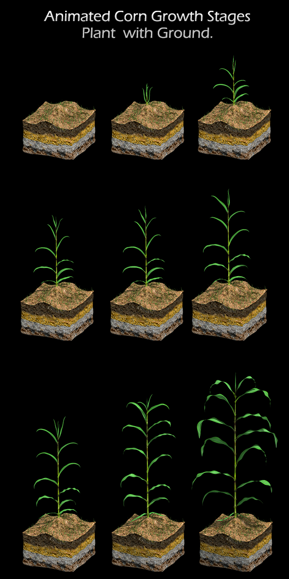 Corn Growth Plant States with Ground - 3DOcean Item for Sale