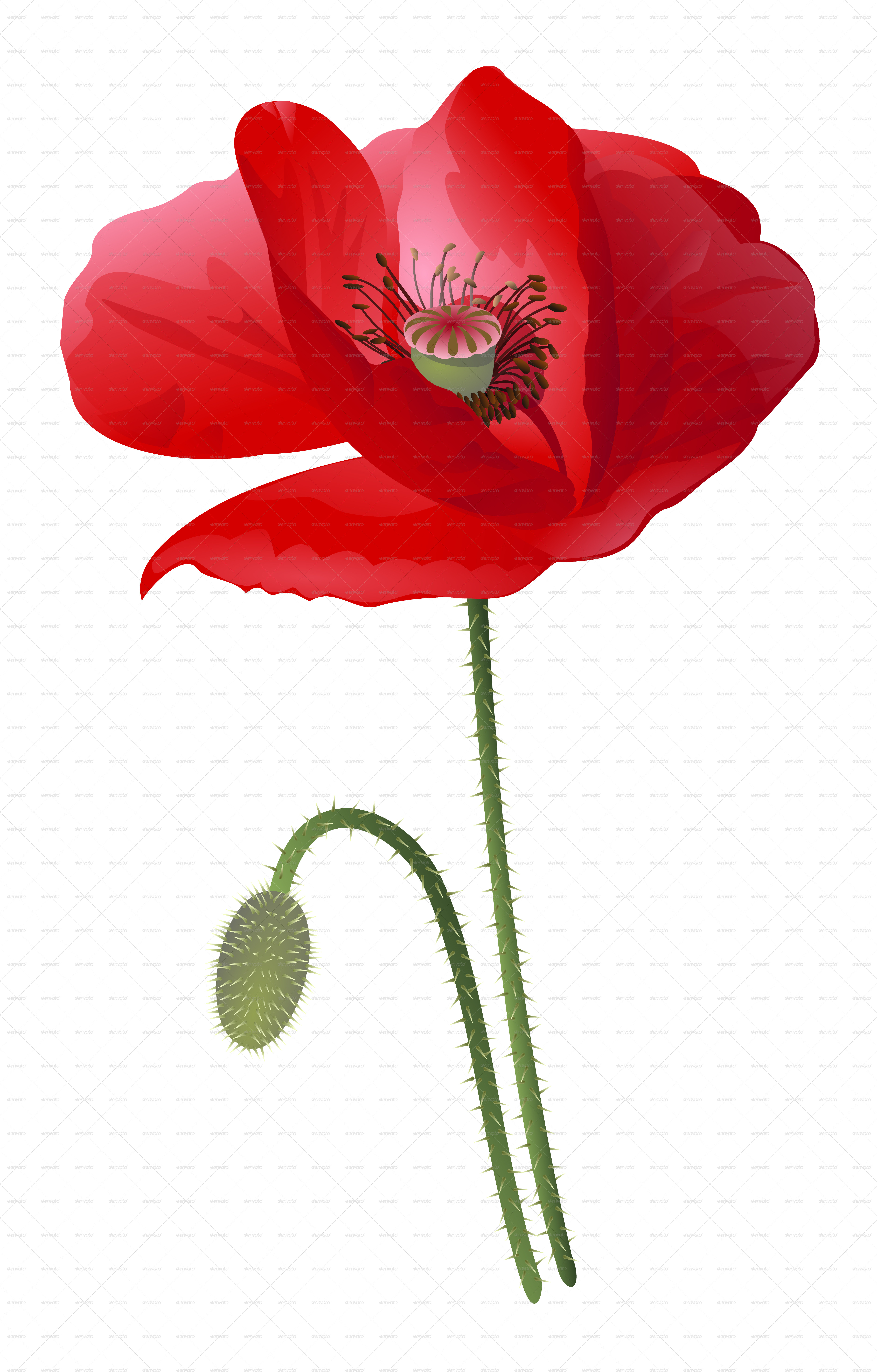 Poppy Flower Isolated By Celana Graphicriver
