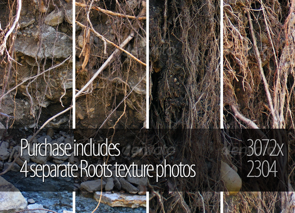 Roots - Nature Textures