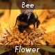 Bee - VideoHive Item for Sale