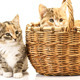 Kittens Cats In Small Studio 11 - VideoHive Item for Sale