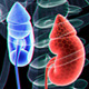 Renal And Skeleton - VideoHive Item for Sale