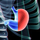 Stomach And Skeleton - VideoHive Item for Sale
