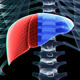 Liver And Skeleton - VideoHive Item for Sale