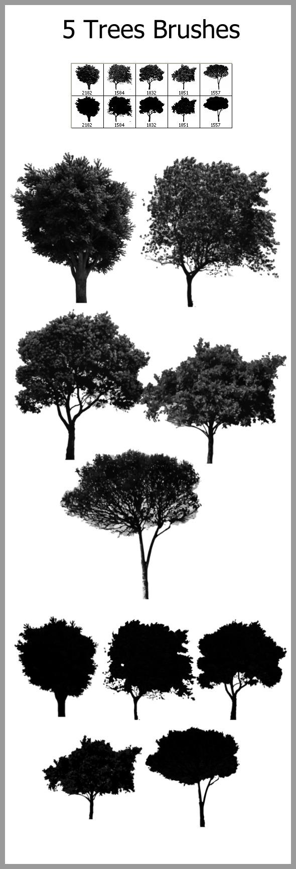 5 Trees Brushes - Flourishes Brushes