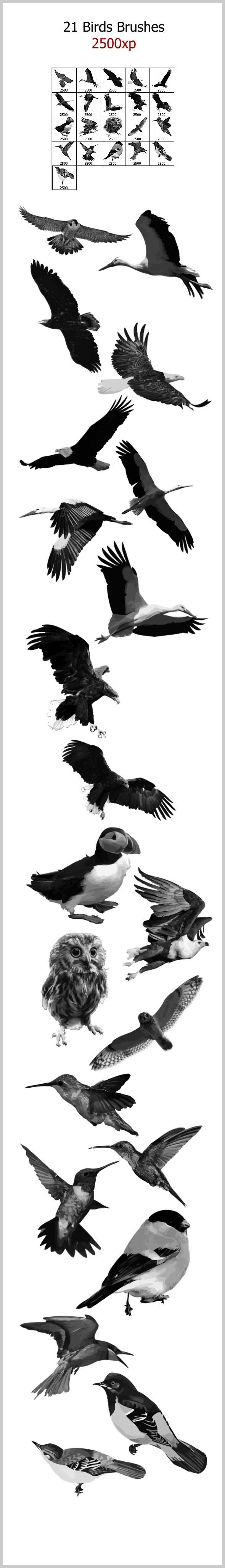 21 Birds Brushes (2500px) - Brushes Photoshop