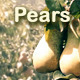Pears - VideoHive Item for Sale