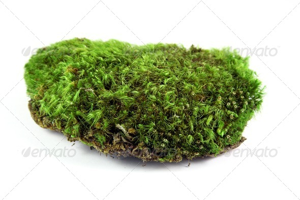Green moss - Stock Photo - Images