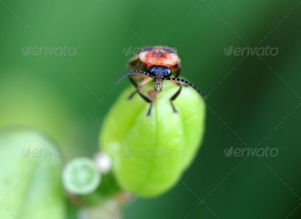 Firefly - Stock Photo - Images