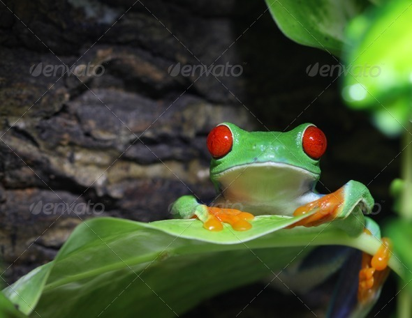 Big Red Eyes - Stock Photo - Images