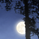 Moonrise Over the Woods - VideoHive Item for Sale
