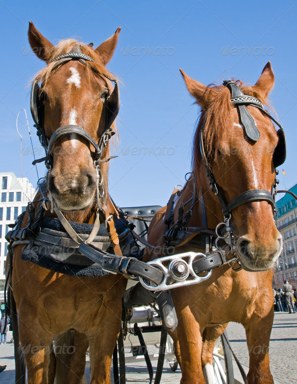 Horses in Berlin - Stock Photo - Images