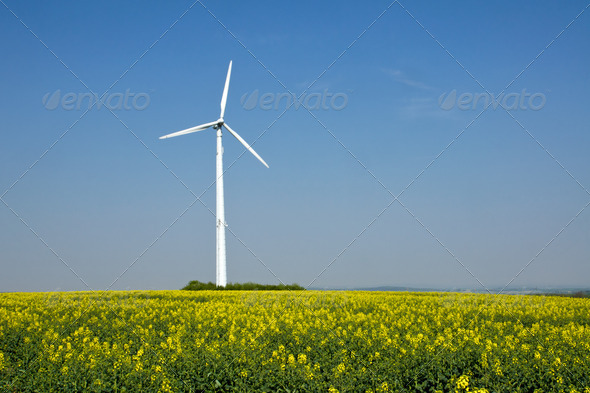 Rapeseed and windwheel - Stock Photo - Images