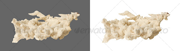 Coral - Nature & Animals Isolated Objects