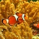Clown Fish in Water - VideoHive Item for Sale