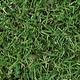 Autumn Tileable Grass - GraphicRiver Item for Sale