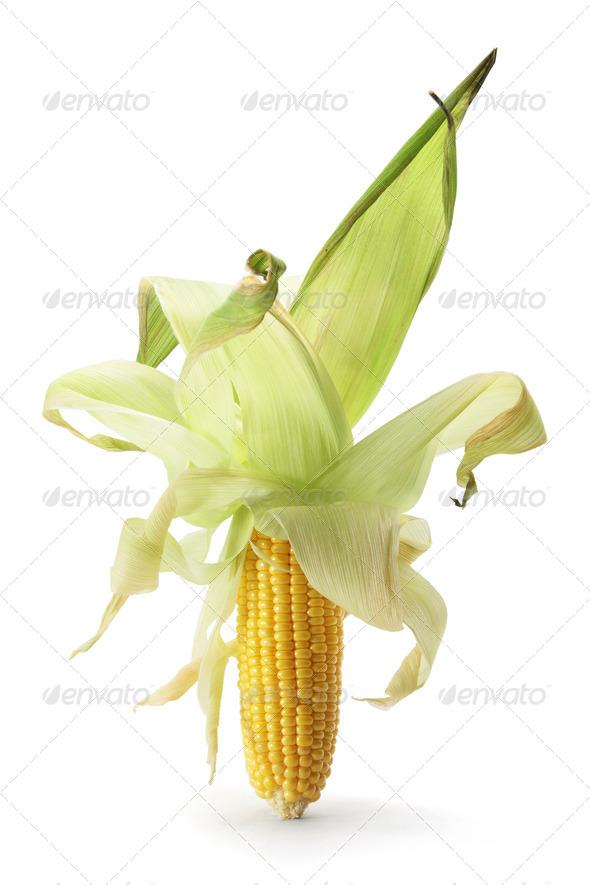 Corn Cob - Stock Photo - Images