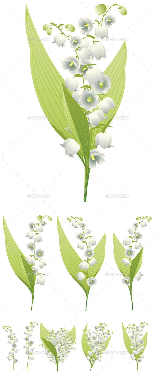 Lily of the Valley - Flowers & Plants Nature