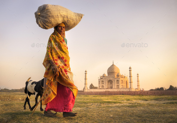 Indian Woman Carrying on Head and Goats near the Taj Mahal - Stock Photo - Images