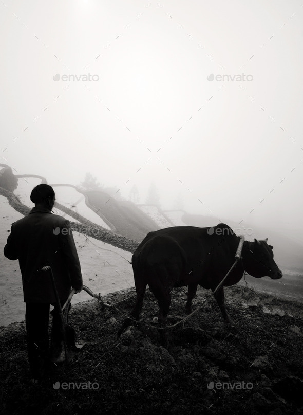 Traditional Farming - Stock Photo - Images