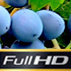 Wine Business - VideoHive Item for Sale