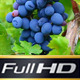 Wine Grapes - VideoHive Item for Sale