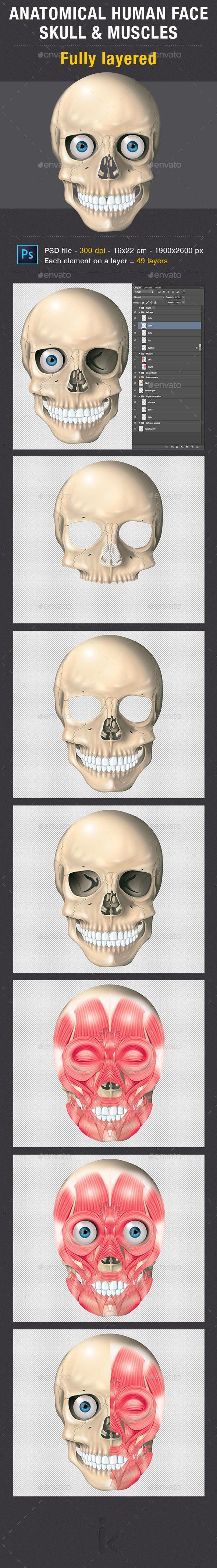 Skull - Illustrations Graphics