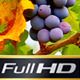 Grapes - VideoHive Item for Sale