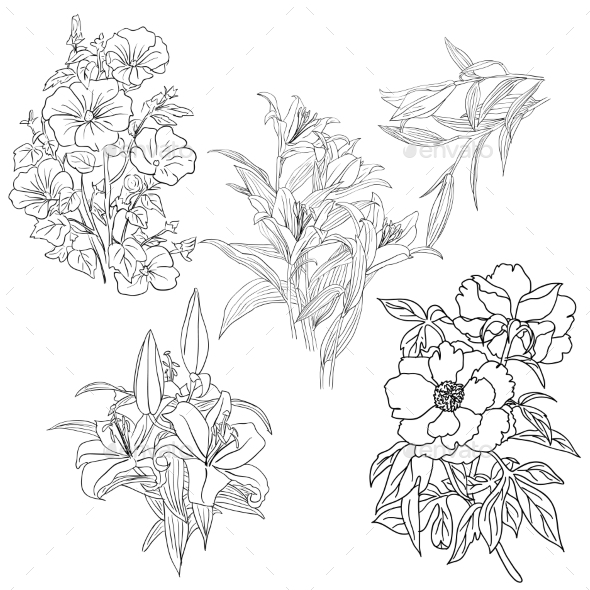 Set of Hand Drawn Flower - Flowers & Plants Nature