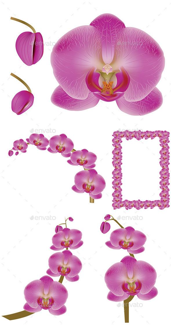 Flower Orchid - Flowers & Plants Nature