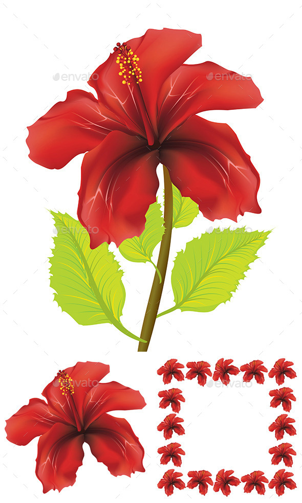 Red Hibiscus - Flowers & Plants Nature