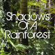 Shadows Of A Rainforest