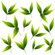 Set of Green Leaves - GraphicRiver Item for Sale
