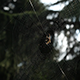 Spider In His Web - VideoHive Item for Sale