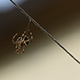 Spider Beginning His Web - VideoHive Item for Sale