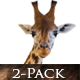 Wild Giraffe Eating - VideoHive Item for Sale