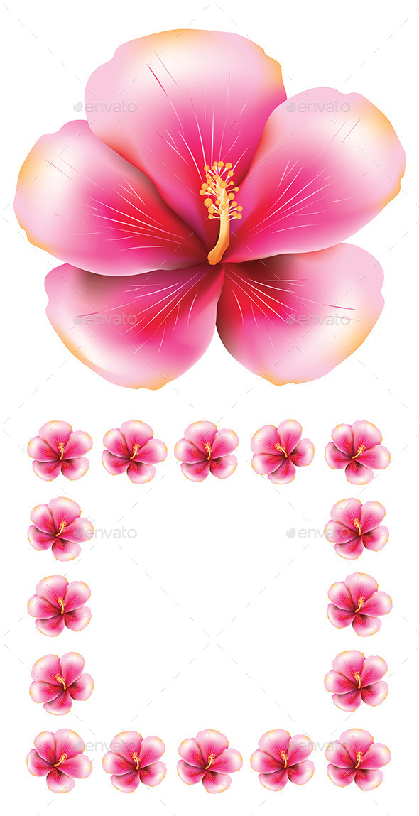 Pink Hibiscus - Flowers & Plants Nature