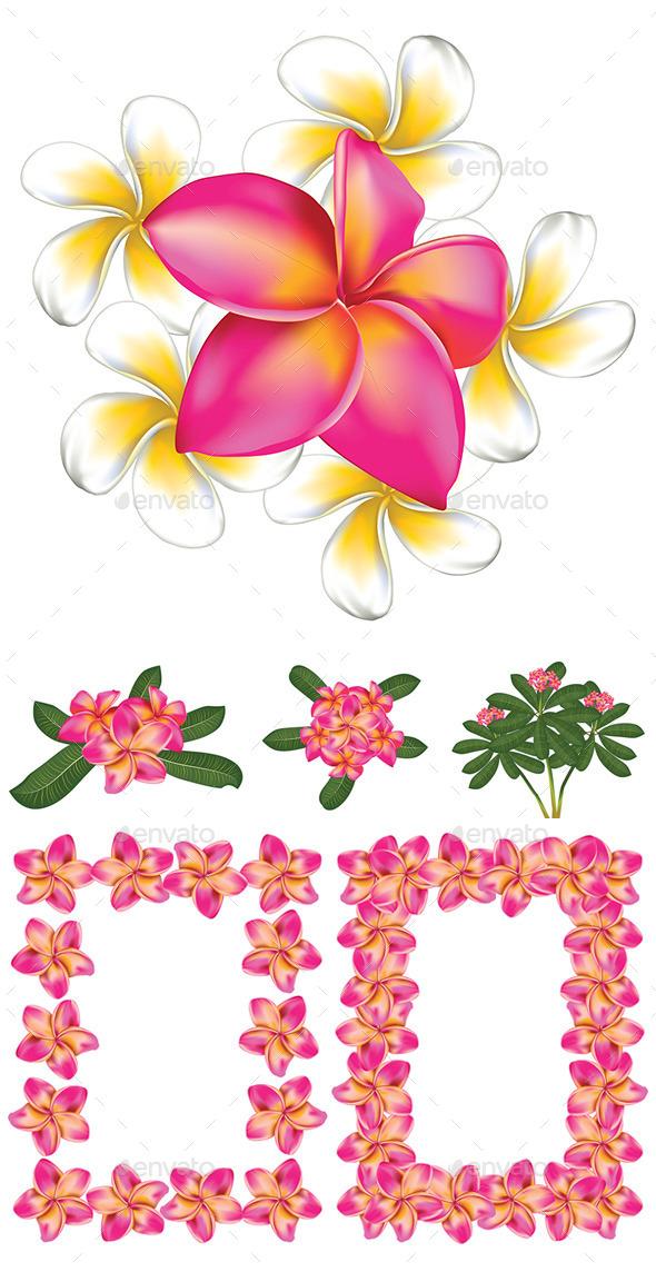 Plumeria Flowers - Flowers & Plants Nature