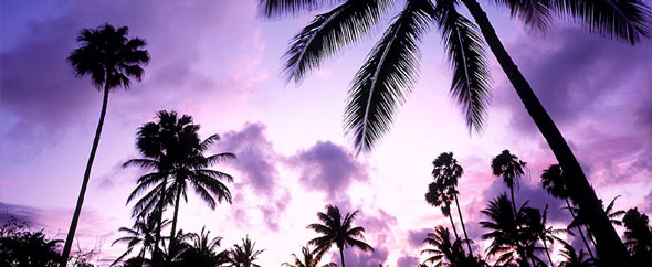 Purple sunset with palm trees background 1