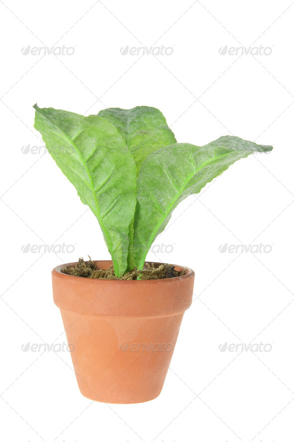 Pot Plant - Stock Photo - Images