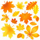 Set Autumn Leaves - GraphicRiver Item for Sale